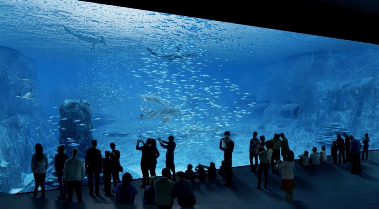 aquarium megastructure nausicaa inside europe s largest fish tank