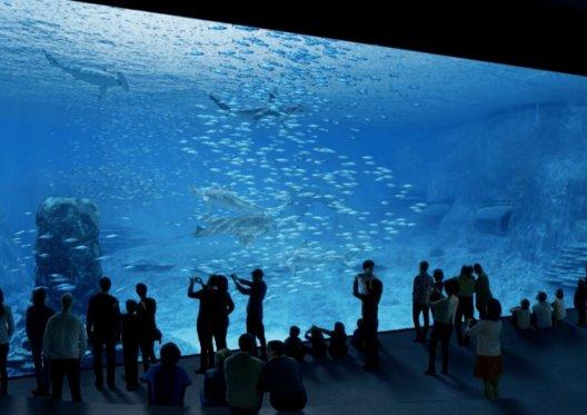 A (re)voir sur RMC Découverte : Nausicaa, le plus grand aquarium d'Europe